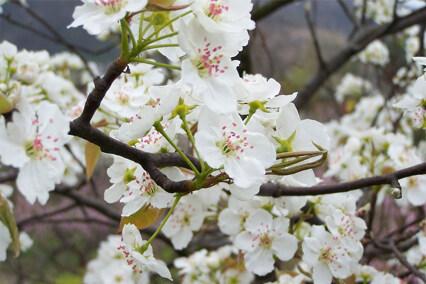 行走在春日里的花花世界